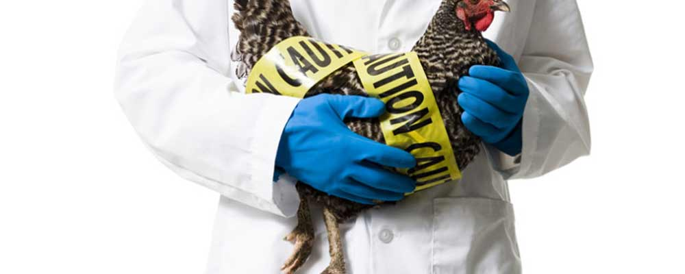 Prepare for the WORST, if Farm Bio-security measures are not your forte