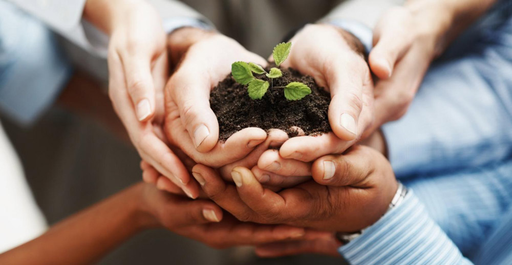 Looking Beyond Domestic Market: Indian Seed Sector