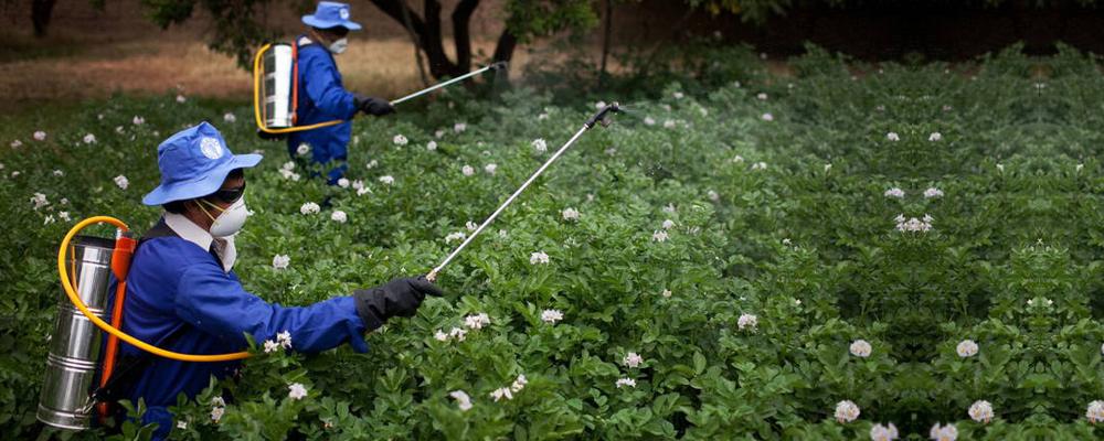Awareness key for safe pesticide use
