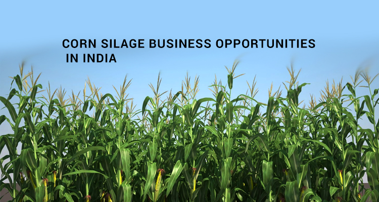 Corn Silage business opportunities in India
