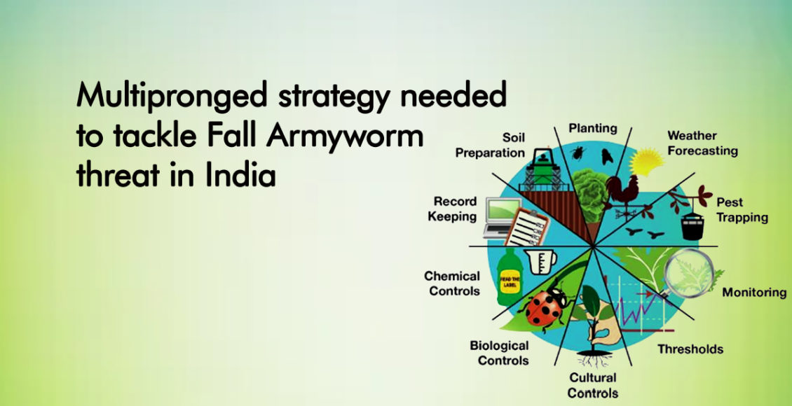 Multipronged strategy needed to tackle Fall Armyworm threat in India