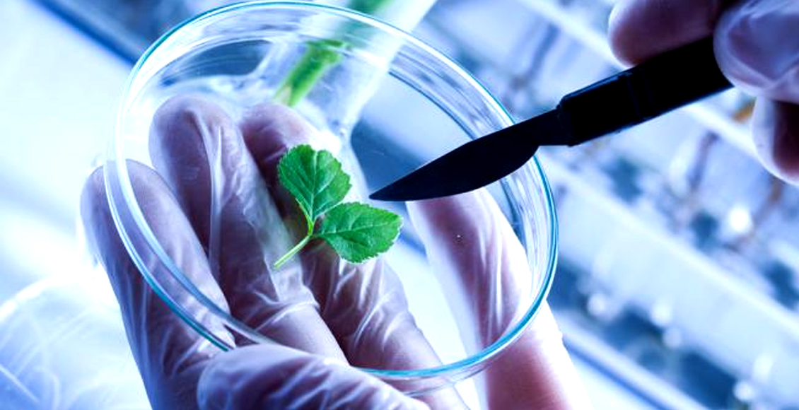 Whither genetic engineering technology in Indian Agriculture?