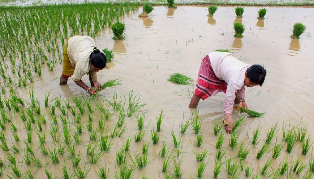 Increase in Kharif sowing – Will it be boon or bane for farmers?