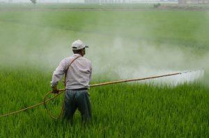 herbicide-avignon-in-rice-field-avignon-a-surname