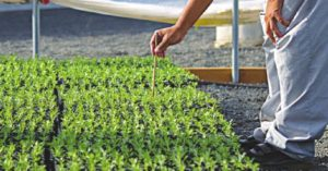 Technical due diligence of target seed company for acquisition by agrochemical major