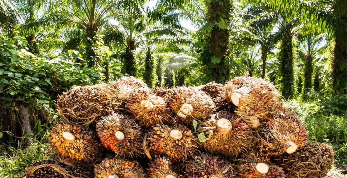 Oil palm in sustainable cropping system holds promise for India