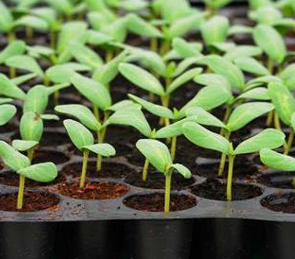 Emerging opportunities in crop production