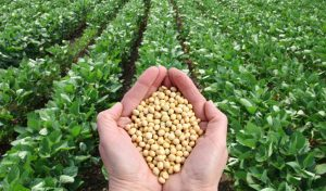Seed regulatory compliance key to ensure FTO for a seed company