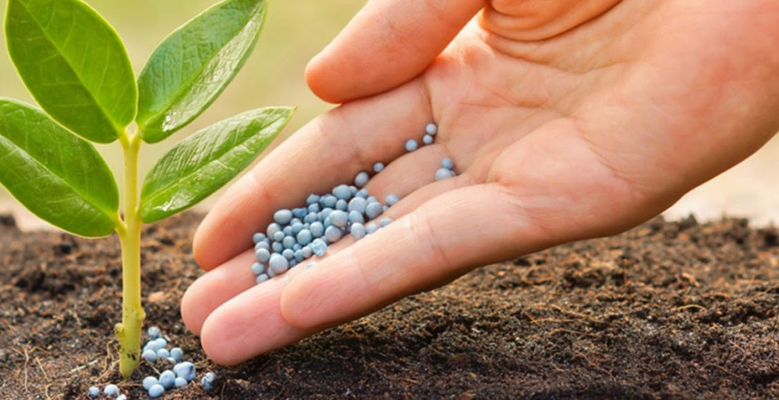Plant Nutrition Delivery Technologies: A way to Sustainable Farming Practice