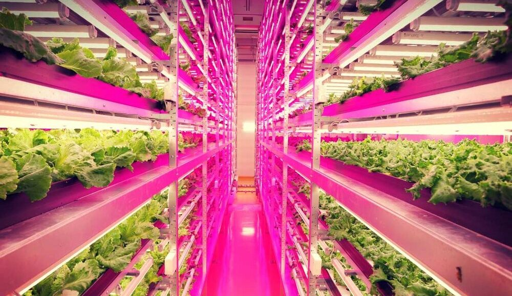 Advances in Soilless farming technology provides avenues for business expansion