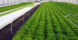 Growing Soilless