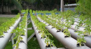 Increasing Relevance of Hydroponics
