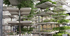 Vertical Farming – A farming practice with lots of potential and untapped opportunity for growing fruits and vegetables