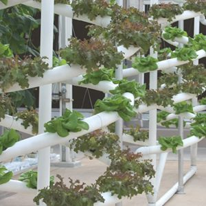 e horticultural ecosystem