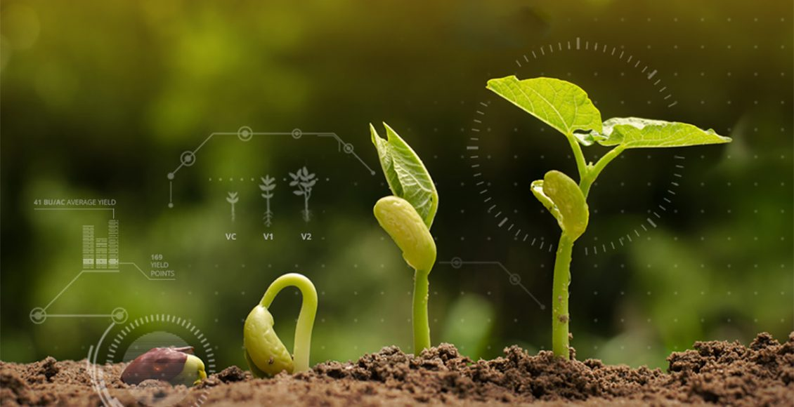 Enhancing Traceability in Seed Value Chain by Digitization